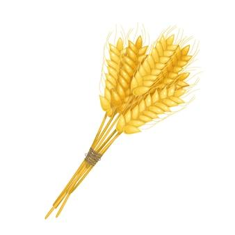 Covone di spighe di grano, spighette e chicchi. produzione di farina o design della birra. illustrazione vettoriale.