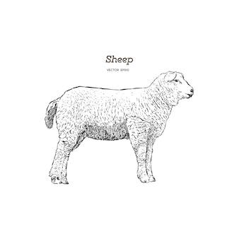 Stile schizzo di pecore.