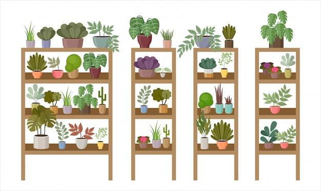 Scaffali e scaffali con piante e fiori domestici.