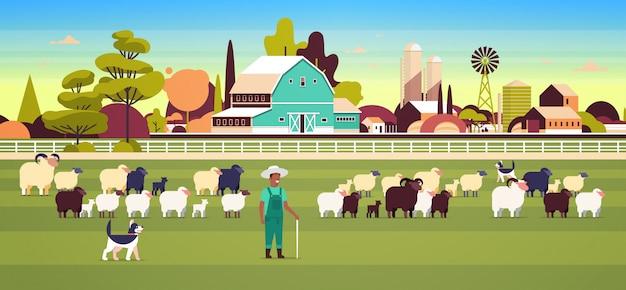 Pastore con bastone e cani gregge di gregge di pecore nere bianche agricoltore maschio allevamento di pecore lana concetto di fattoria campo di campagna paesaggio pianeggiante orizzontale piena lunghezza orizzontale