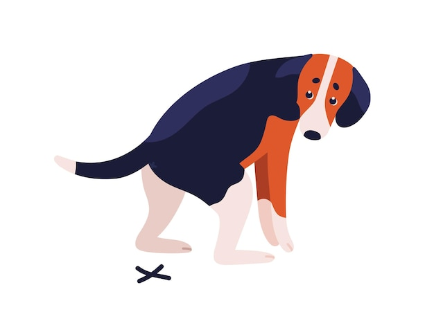 Razza di cane da lepre del cane a pelo corto durante l'illustrazione piana di vettore di cagare. carino maculato colorato doggy pooping isolato su sfondo bianco. animale domestico che ha problemi di defecazione.