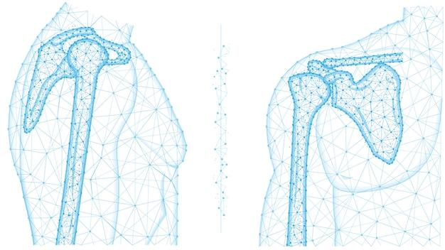 Illustrazione poligonale di vista frontale e laterale dell'articolazione della spalla. anatomia del concetto di scheletro umano. design medico basso poli astratto