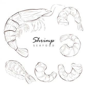 Gamberi, elementi isolati per il design su uno sfondo bianco. set, illustrazione disegnata a mano.