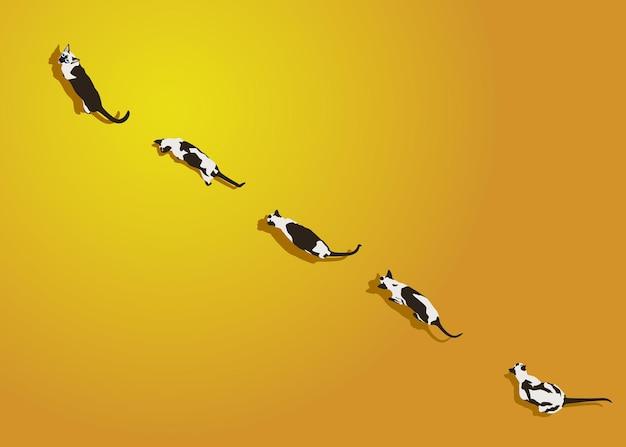 I gatti siamesi camminano su uno sfondo sfumato giallo