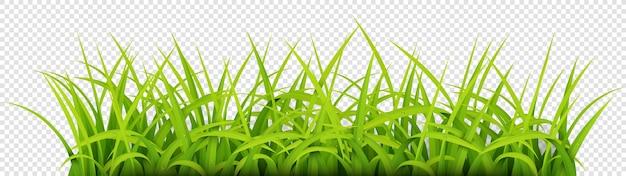 Iscriviti con lo spazio del testo di young grass