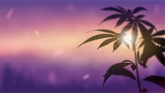 Silhouette di cannabis contro il tramonto.