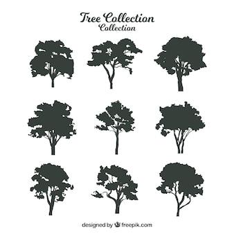Silhouette di alberi con varietà di disegni