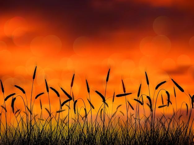 Silhouette di grano al tramonto