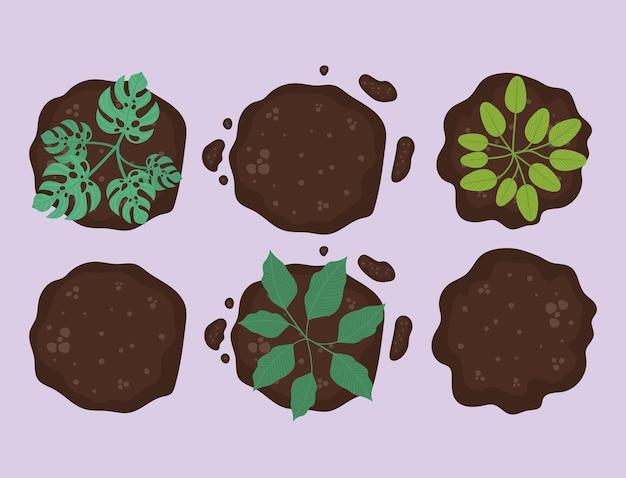 Sei piante sulla terra