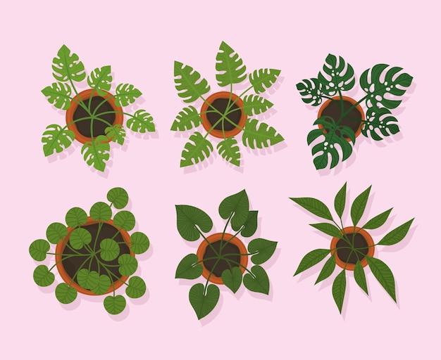 Sei piante in vaso