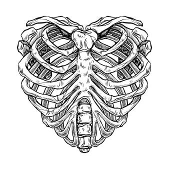 Illustrazione della gabbia toracica a forma di cuore di scheletro