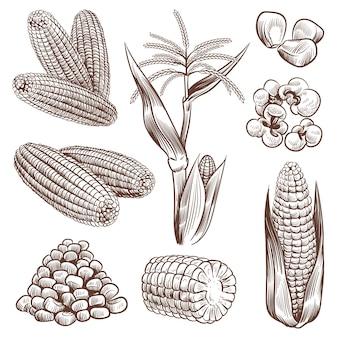 Illustrazione di disegno del mais di schizzo