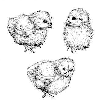 Schizzo simpatico pulcino. illustrazione grafica disegnata a mano di uccellino, pollo. disegno ad inchiostro.