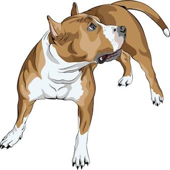 Razza di cane american staffordshire terrier di schizzo