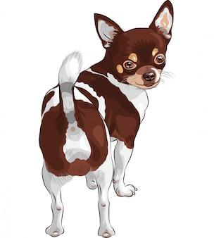 Sorridere della razza della chihuahua del cane di schizzo