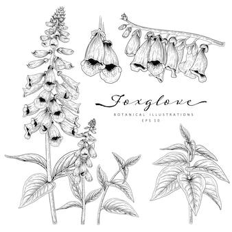 Sketch set decorativo floreale. disegni floreali foxglove.