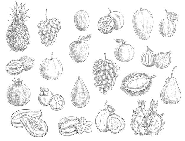 Schizzo frutti isolati icone illustrazione