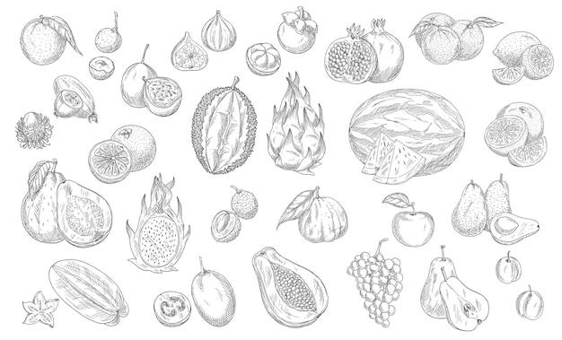 Schizzo frutti icone isolate