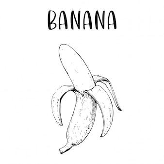 Schizzo disegnato a mano banana