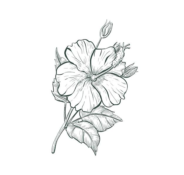 Schizzo hibiscus fiore isolato retrò segno fiore tropicale hibiscus schizzo illustrazione