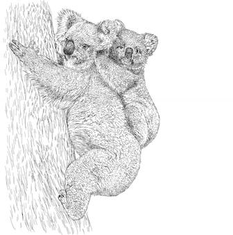Schizzi la koala australiana realistica con un bambino sull'albero.