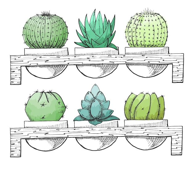 Disegna piante grasse in vaso su un supporto di legno. acquerello stilizzato. illustrazione vettoriale.