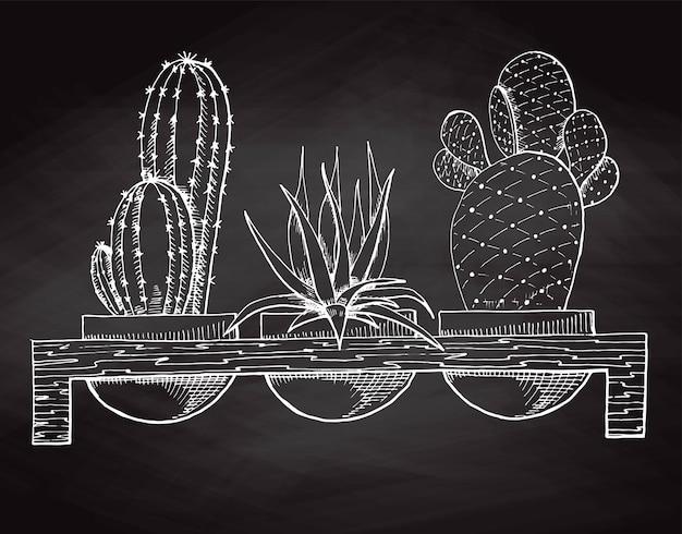 Disegna tre piante grasse in vaso su un supporto di legno isolato alla lavagna. illustrazione vettoriale.