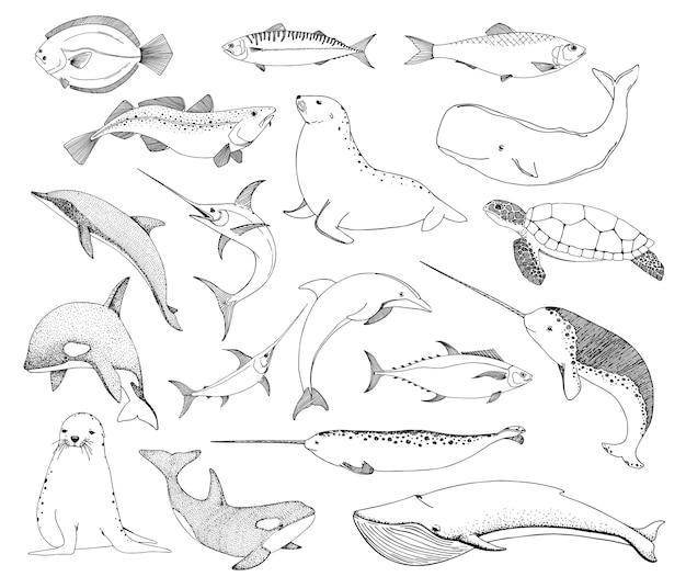 Disegna varie creature marine. tartaruga tricheco, delfino e altri.
