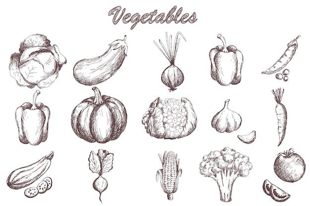 Set di verdure di schizzo raccolta di verdure da giardino zucca pomodoro carota cavolo zucchine