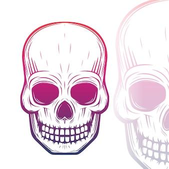 Illustrazione del cranio su bianco
