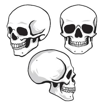 Set di teschi nella collezione di illustrazioni vettoriali in stile disegno a mano