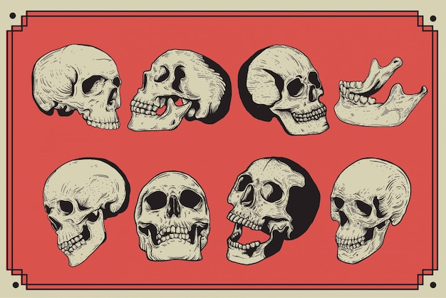 Illustrazione disegnata a mano isolata stile d'annata dell'incisione del cranio.