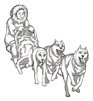 Cani da slitta, aiutanti di animali. disegno lineare di cani che guidano un uomo, tradizioni dei popoli del nord, disegno in bianco e nero