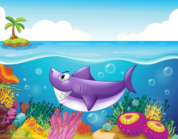 Uno squalo sorridente sotto il mare con i coralli