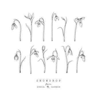Vettore di elementi disegnati a mano del fiore di bucaneve.