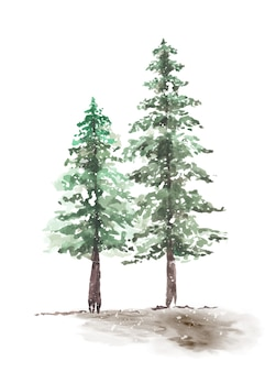 Acquerello dipinto a mano degli alberi di pino delle coppie di inverno nevoso. stagionale di inverno decorativo di vettore dell'albero di natale del pino della foresta naturale verde.