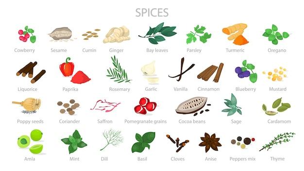 Spezie per cucinare la deliziosa collezione di cibi