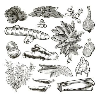 Spezie ed erbe aromatiche insieme disegnato a mano
