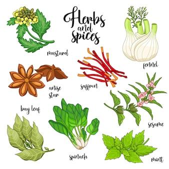 Set di spezie ed erbe aromatiche