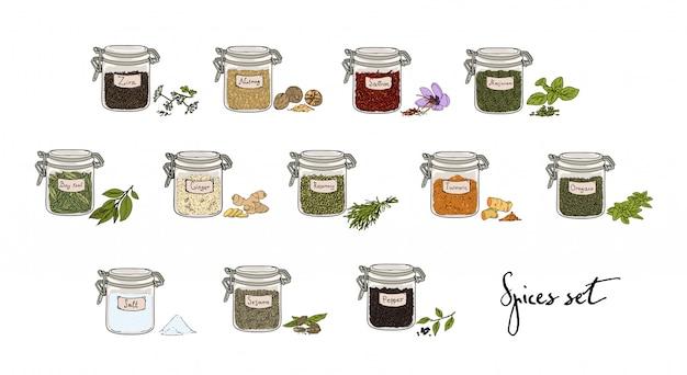 Spezie in vasetti, set grande. illustrazione disegnata a mano collezione.