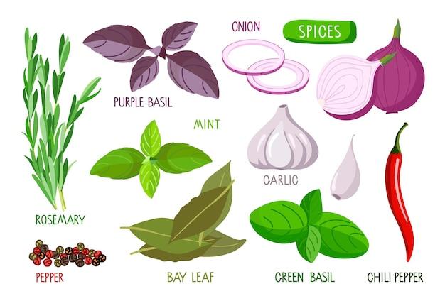 Set di spezie raccolta di erbe fresche, verdure e radici con iscrizioni isolate su bianco