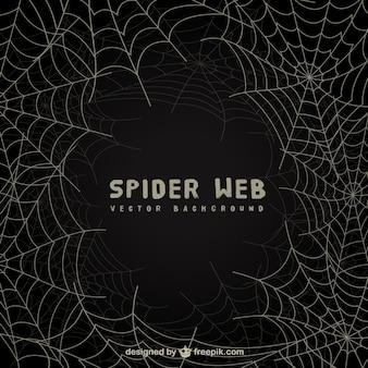 Spider web background sulla lavagna