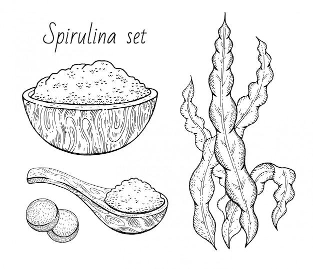 Insieme di abbozzo di alga spirulina. disegno inciso pianta marina disegnata a mano.