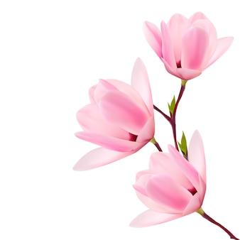 Sfondo di primavera con brunch in fiore di fiori rosa.