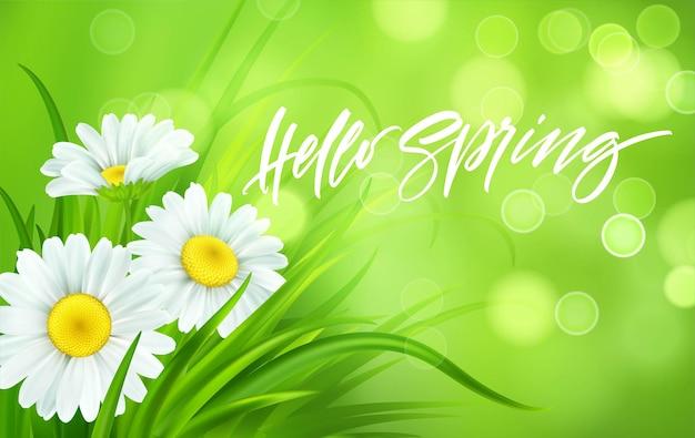Sfondo di primavera con margherite ed erba verde fresca. ciao primavera grafia lettering. illustrazione