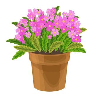 Fiori primaverili colorati in vaso piante vettoriali per piante in vaso da casa e da giardino