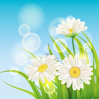 Erba verde fresca di margherite primaverili, piacevoli colori primaverili succosi