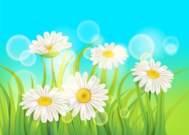 Margherite di primavera su erba verde fresca