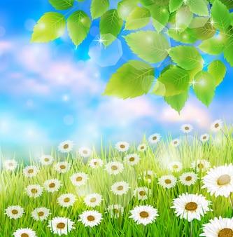 Fondo del prato del giacimento della primavera con le foglie fresche