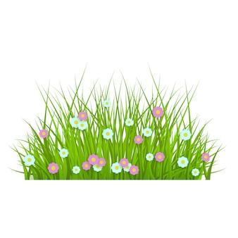 Erba verde lussureggiante floreale della primavera e confine del prato inglese con le margherite.